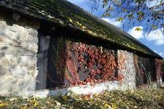 Старый камень и деревянный амбар покрытые мхом и взбираясь заводами в осени Стоковые Изображения