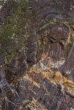 Старый камень с зеленым мхом Стоковое Изображение