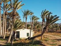 Старый канарский дом между пальмами Стоковое фото RF