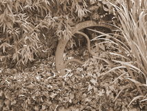 Старый катите внутри sepia найденный в саде Стоковые Фотографии RF