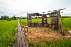 Старый класс в зеленом поле риса Стоковое Изображение
