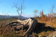 старый корень Стоковое Изображение RF