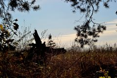 старый корень Стоковые Фотографии RF