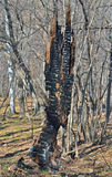 Старый, который сгорели пень 2 Стоковые Фото