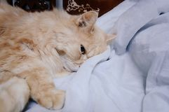 Старый кот смотрит что-то прежде чем он идя спать в полночи Стоковое Фото