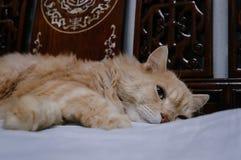Старый кот смотрит что-то прежде чем он идя спать в полночи Стоковое Изображение