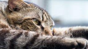 Старый кот спать на деревянном поле с предпосылкой нерезкости Стоковая Фотография