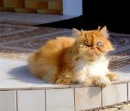 Старый кот шторок имбиря без глаза сидя перед домом стоковое фото rf