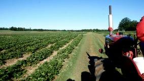 Старый красный трактор двигая дальше ферму, современный аграрный переход, управлять машины - 4 зажима видеоматериал