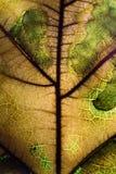 Старый макрос лист Стоковое Фото