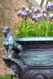 Старый металлический цветочный горшок с bluebells виноградных гиацинтов стоковые изображения
