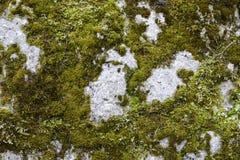 Старый мох на утесе Стоковые Фото