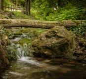 Старый мшистый ствол дерева над малым потоком каскада и большим мшистым roc Стоковое фото RF