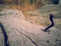 Старый ноготь Стоковое Изображение RF
