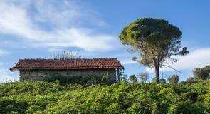 Старый дом покрытый кустами Стоковая Фотография RF
