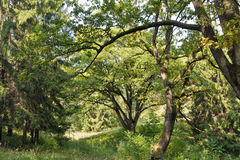 Старый парк близко к замку Schonborn Chynadiyovo, Украина Стоковое фото RF