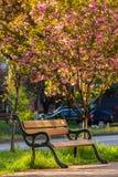Старый парк города с фонариком Стоковое Изображение RF