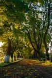 Старый парк города с фонариком Стоковая Фотография