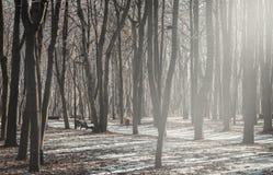 Старый парк города Стоковая Фотография RF