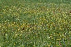 Старый парк, покинутый особняк, осень, понижаясь желтый цвет выходит Стоковые Изображения RF