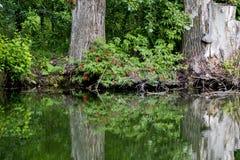 Старый парк с прудами Стоковое Фото
