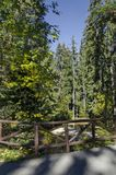 Старый парк Tsarska или королевское Bistritsa с террасным рекой и по-разному деревьями в досточтимом осеннем лесе Стоковая Фотография RF