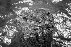 Старый пень в воде Стоковое Фото