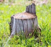 Старый пень дерева на зеленой траве Стоковое Фото