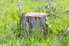 Старый пень дерева на зеленой траве Стоковое Изображение RF