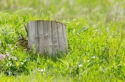 Старый пень дерева на зеленой траве Стоковые Фото