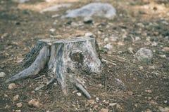 Старый пень дерева в парке лета Стоковое фото RF