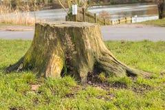 Старый пень дерева в парке с грибами Стоковые Фотографии RF
