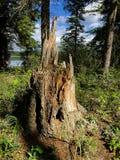 Старый пень дерева озером на солнечный день Стоковые Фото