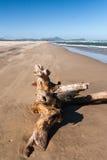 Старый пень дерева Стоковое Фото