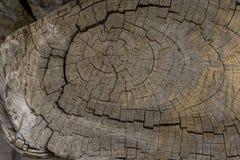 Старый пень кедра для деревянных текстуры или предпосылки Стоковые Изображения RF