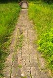 Старый перерастанный путь к мосту Стоковые Фото