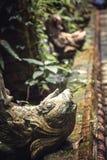 Старый перерастанный тропический азиатский сад Стоковые Фотографии RF