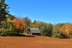 Старый покинутый амбар в древесинах осени Стоковая Фотография