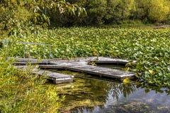 Старый покинутый док среди lilypads Стоковые Фотографии RF