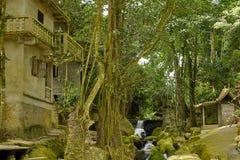 Старый покинутый дом среди джунглей Стоковое Изображение RF