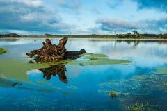 Старый поплавок дерева a Стоковое Изображение