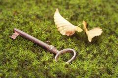 Старый потерянный ключ Стоковое Фото