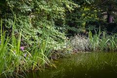 Старый пруд с темной ой-зелен водой под большими деревьями Вокруг своих много striped заводов стоковые изображения rf