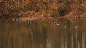 Старый пруд в парке города Ландшафт сток-видео