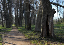 Старый путь парка стоковые фотографии rf