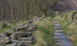 Старый путь через поля Стоковая Фотография RF