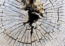 Старый раздел дерева стоковые фото