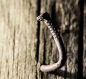 Старый ржавый ноготь в куске дерева Макрос стоковые фотографии rf