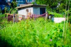 Старый сарай деревни Стоковые Фотографии RF