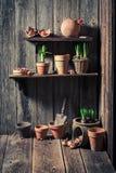 Старый сарай с старыми глиняными горшками и садовничая инструментами Стоковые Изображения